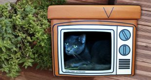 TV Shaped Cat Bed